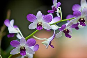 Orchids by allim7905