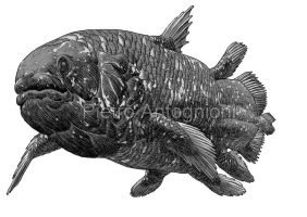 Coelacanth by pietro-ant
