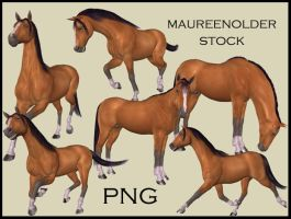 STOCK PNG horse by MaureenOlder