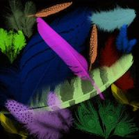 Feathers brushes by Mella68