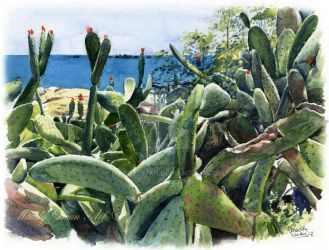 Cactus, watercolour by MaddySwan