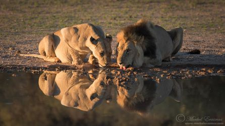 Joined for a Drink by MorkelErasmus