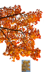 Autumn leaves 3 STOCK by AStoKo