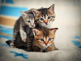The Three Musketeers by ZoranPhoto