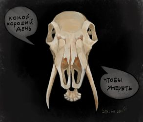 skull by Sipr0na