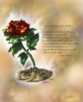 Rose that grew from concrete by spydaman