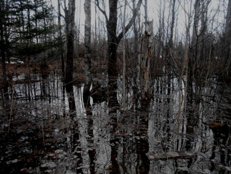 -Swamp by TH3INTROV3RT