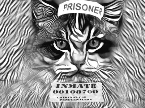 Lifelong for the unrepentant mouse killer by eReSaW