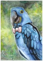Blue macaw by Paintwick
