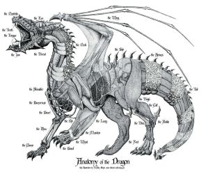 Anatomy of the Dragon by thirdmoth
