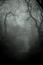 Lacertine Forest by ClickClickBangUK