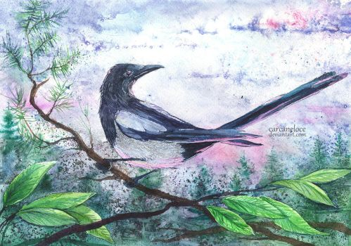 Evening Magpie by Carcaneloce