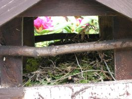 Bird House, Furnished by Dowlphin