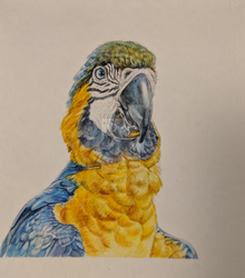parrot 2 by ir-2