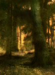 forest 18 by Amalus