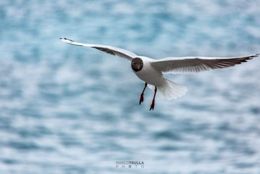 The Seagull by Ragnarokkr79