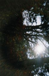 Sun And trees by hanhan2413