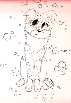Introducing... Clover!!! by Canine--Artist