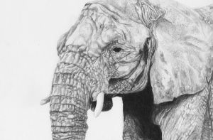 Elephant by kinobuta