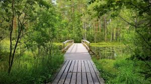 Wooden Bridge by Pajunen