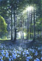 Bluebells in the sun  by Amphy555