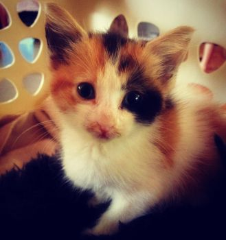 Peaches 5 weeks old 1 by feariedaisy