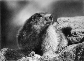 Phil the groundhog by francoclun