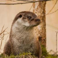 Curious Otter I by NicoFroehberg