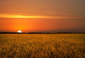 Golden Field Sunset Stock by leeorr-stock