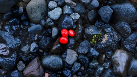 Icelandic Berries by Mathieustern