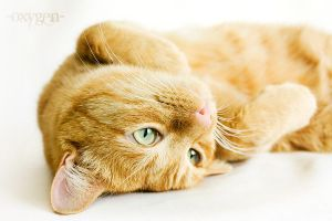 relax cat by oxygen2608