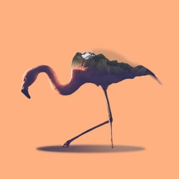 -- Flamingo -- by 0l-Fox-l0