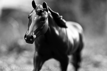 Chasing Shadows by TR-Ranch