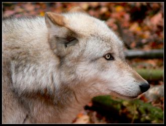 Silver Eyes by nikkiburr
