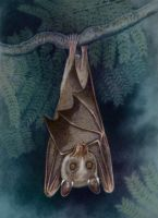 Wahlberg's Epauletted Fruit Bat by WillemSvdMerwe