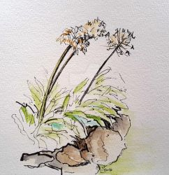 Agapanthus study - quick sketch by Harmony1965