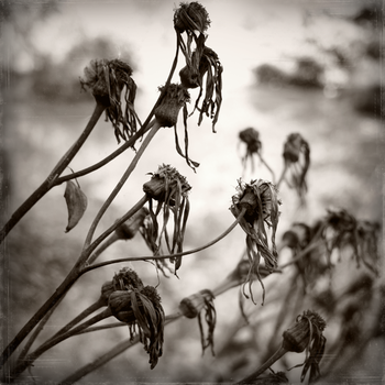 tattered remnants of longing by equivoque