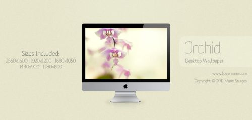 Orchid for Desktop by mariesturges