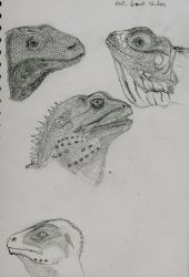 Lizard Studies by shwabadi