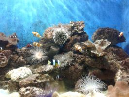 Fishes and Coral Reefs by jcpag2010