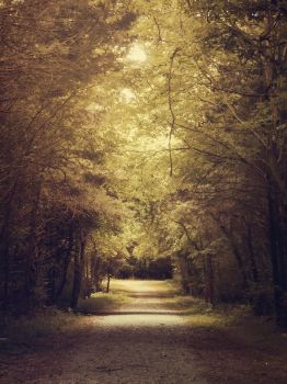 Until the Fall Comes by DuPipkin