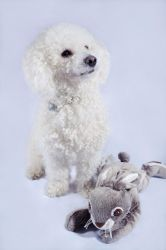 Bichon Frise and Bunny by RasmusLuostarinenArt