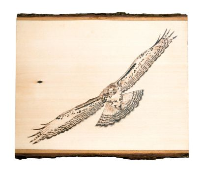 Red Tailed Hawk Woodburning by EdgedFeather