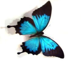 moths and butterflies stock 43 by hatestock