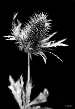 b/w nature.6 by Ilmael