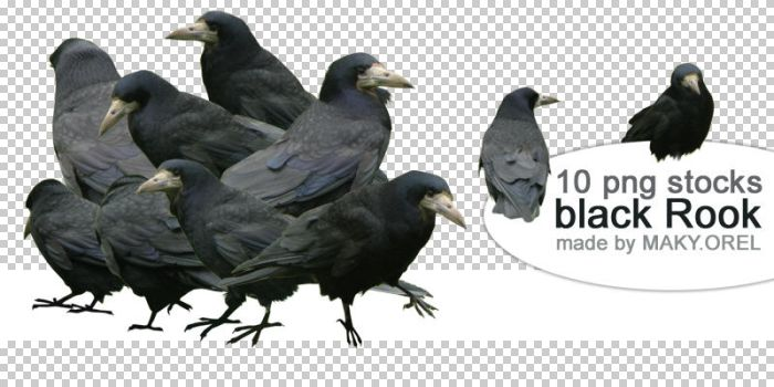 PNG STOCK SET: Black rook by MAKY-OREL