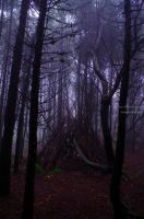 Somewhere in the woods... by P3droD