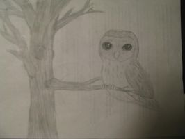 Owl by Foxeyes32