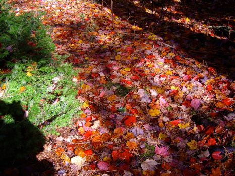 Autumn Red Carpet by AndySerrano