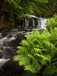 Summer stream 2 by Wodger